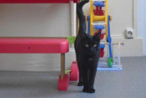 Discovery alert Cat Male , Between 9 and 12 months Sedan France