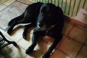 Discovery alert Dog miscegenation Male Anduze France