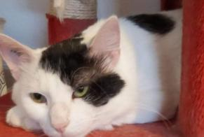 Disappearance alert Cat Male , 1 years Besançon France