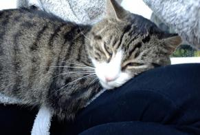 Discovery alert Cat Male Niort France