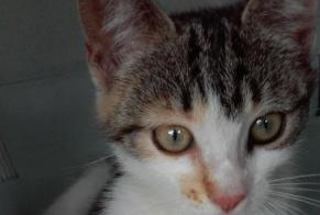 Discovery alert Cat miscegenation Female , Between 1 and 3 months Niort France