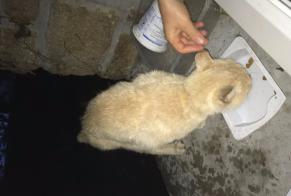 Discovery alert Cat Male Inzinzac-Lochrist France