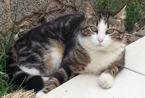Disappearance alert Cat miscegenation Male , 10 years Gardanne France