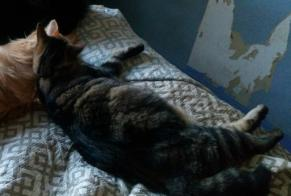 Disappearance alert Cat Female , 2 years Artannes-sur-Indre France