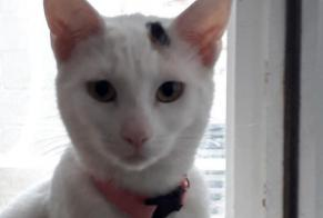 Disappearance alert Cat  Female , 1 years Le Perreux-sur-Marne France