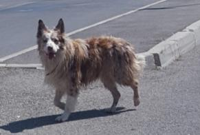 Discovery alert Dog  Male Saint-Chamas France