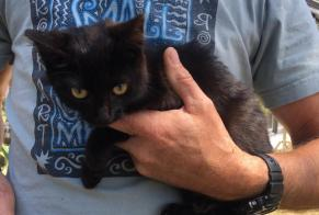 Discovery alert Cat Female Saint-Pair-sur-Mer France