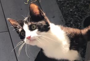 Disappearance alert Cat Female , 0 years Beaumont France
