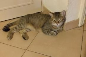 Disappearance alert Cat Male , 7 years Mornas France