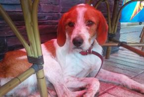 Discovery alert Dog Male Vernet-les-Bains France