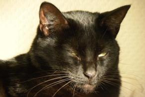 Disappearance alert Cat Male , 12 years Thénac France