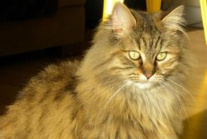 Disappearance alert Cat Female , 11 years Thénac France