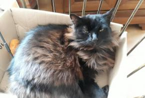 Disappearance alert Cat Female , 10 years Castres France