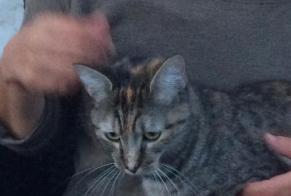 Discovery alert Cat Female , 2 years Beauvoir-sur-Niort France