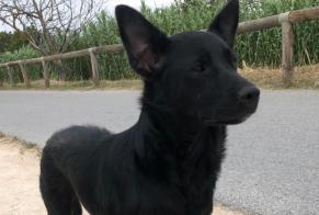 Discovery alert Dog Female Le Barcarès France