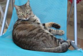 Disappearance alert Cat  Male , 5 years Saint-Sulpice-les-Champs France