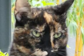 Disappearance alert Cat Female , 2 years Joinville-le-Pont France