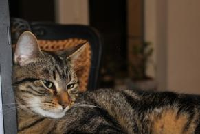 Disappearance alert Cat Male , 1 years Athée-sur-Cher France