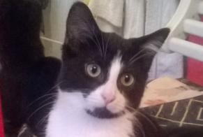 Disappearance alert Cat Male , 1 years Grattery France