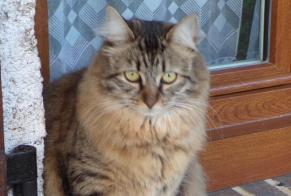 Disappearance alert Cat Female , 4 years Vendôme France