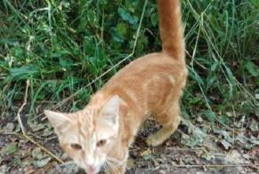 Discovery alert Cat Unknown Morvillars France