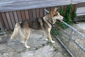 Discovery alert Dog Male Guichen France