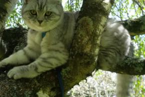 Disappearance alert Cat  Male , 4 years Saint-Erblon France