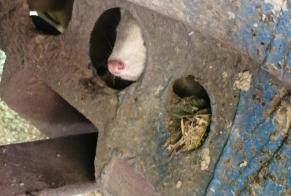 Discovery alert Other Furet Unknown Lavalette France