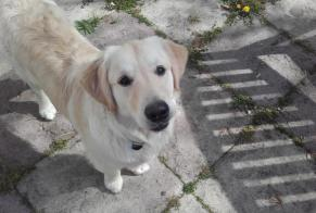 Disappearance alert Dog  Male , 1 years Val-de-Mercy France