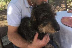 Disappearance alert Dog  Male , 5 years Chambon-sur-Voueize France