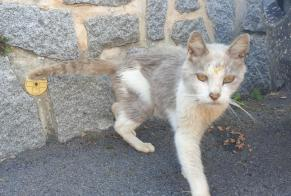 Discovery alert Cat Unknown Cherbourg-en-Cotentin France