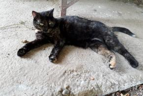 Discovery alert Cat Female Vayrac France