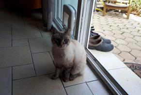 Discovery alert Cat miscegenation Male Plancher-Bas France