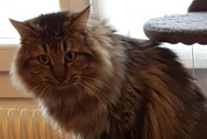Disappearance alert Cat  Male , 2 years Le Pin France