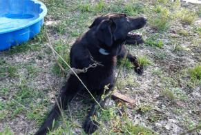 Discovery alert Dog miscegenation Female , 4 years Pompignan France