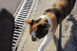 Discovery alert Cat Unknown Pompaire France