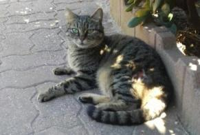 Discovery alert Cat Unknown , 1 year Fleury France