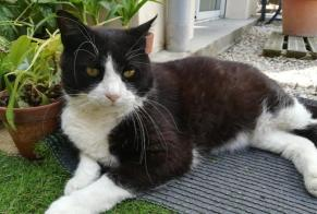 Disappearance alert Cat Male , 8 years Dijon France