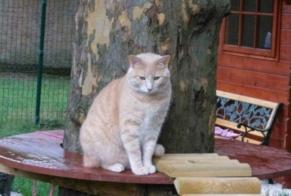 Disappearance alert Cat  Female , 6 years Blaisy-Haut France