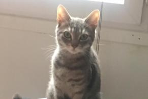 Disappearance alert Cat miscegenation Female , 1 years L'Aigle France