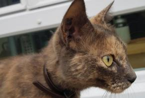 Discovery alert Cat Female , 2 years Montech France
