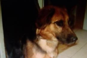 Disappearance alert Dog miscegenation Female , 1 years Sorgues France