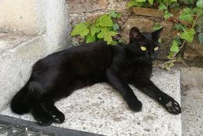 Disappearance alert Cat  Female , 1 years Torigny-les-Villes France