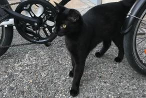 Discovery alert Cat  Unknown Avignon France