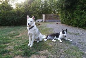 Disappearance alert Dog  Female , 2 years Dontreix France