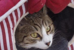 Disappearance alert Cat Male , 9 years Mazan France