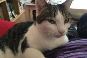 Disappearance alert Cat  Male , 4 years Châteauneuf-de-Gadagne France