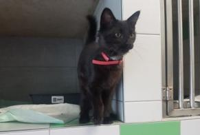 Discovery alert Cat miscegenation Female , Between 1 and 3 months Coutens France