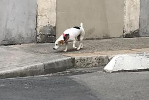Discovery alert Dog Female Nîmes France