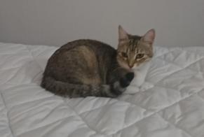 Disappearance alert Cat Female , 1 years Uchaud France